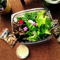 綜合堅果生菜沙拉-10盒入(豐富的綜合歐系生菜 火焰生菜 綠橡生菜 ....等等皆安全無毒 鮮甜爽脆)(免運優惠中)